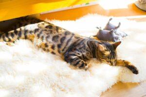 ムートンラグと猫