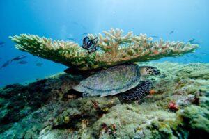 海亀と珊瑚礁