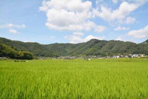 田と山の景色